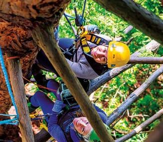 Forestry Students Explore Tree Canopy